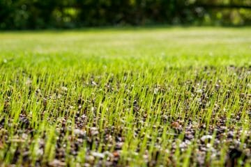 how long does grass seed take to germinate