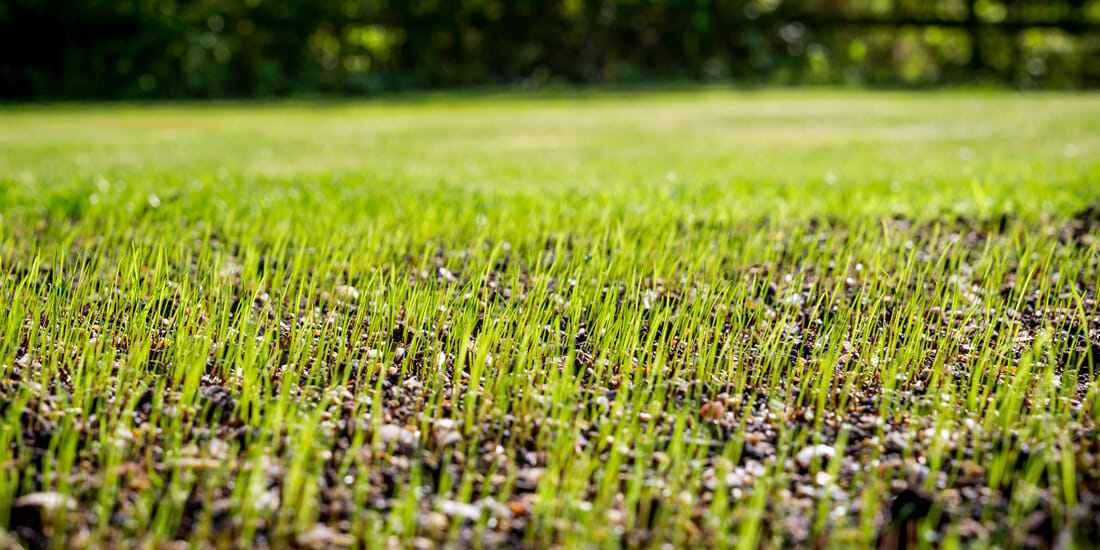 how long does grass seed take to sprout