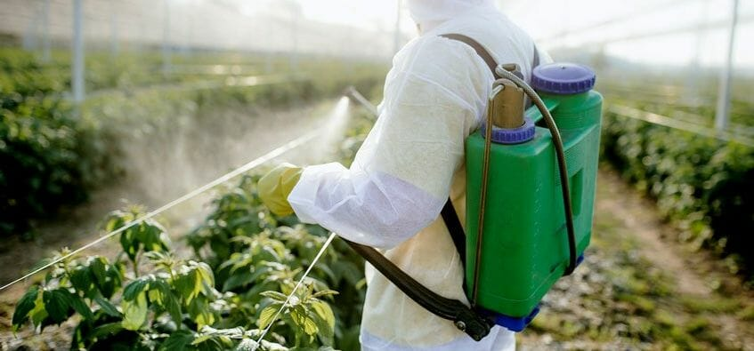 how long does it take for atrazine to work