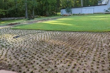 how long does it take for zoysia plugs to fill in