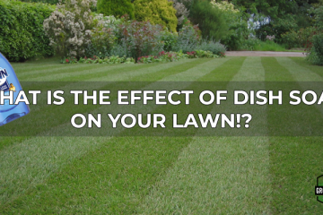 what is the effect of dish soap on your lawn