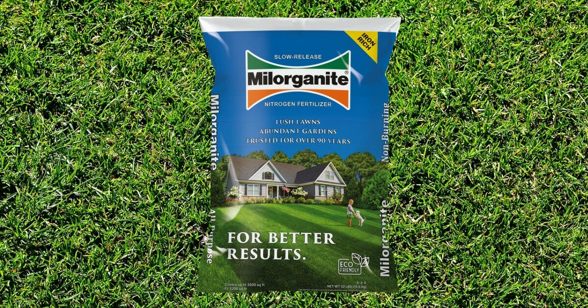 how long does milorganite take to work on your lawn
