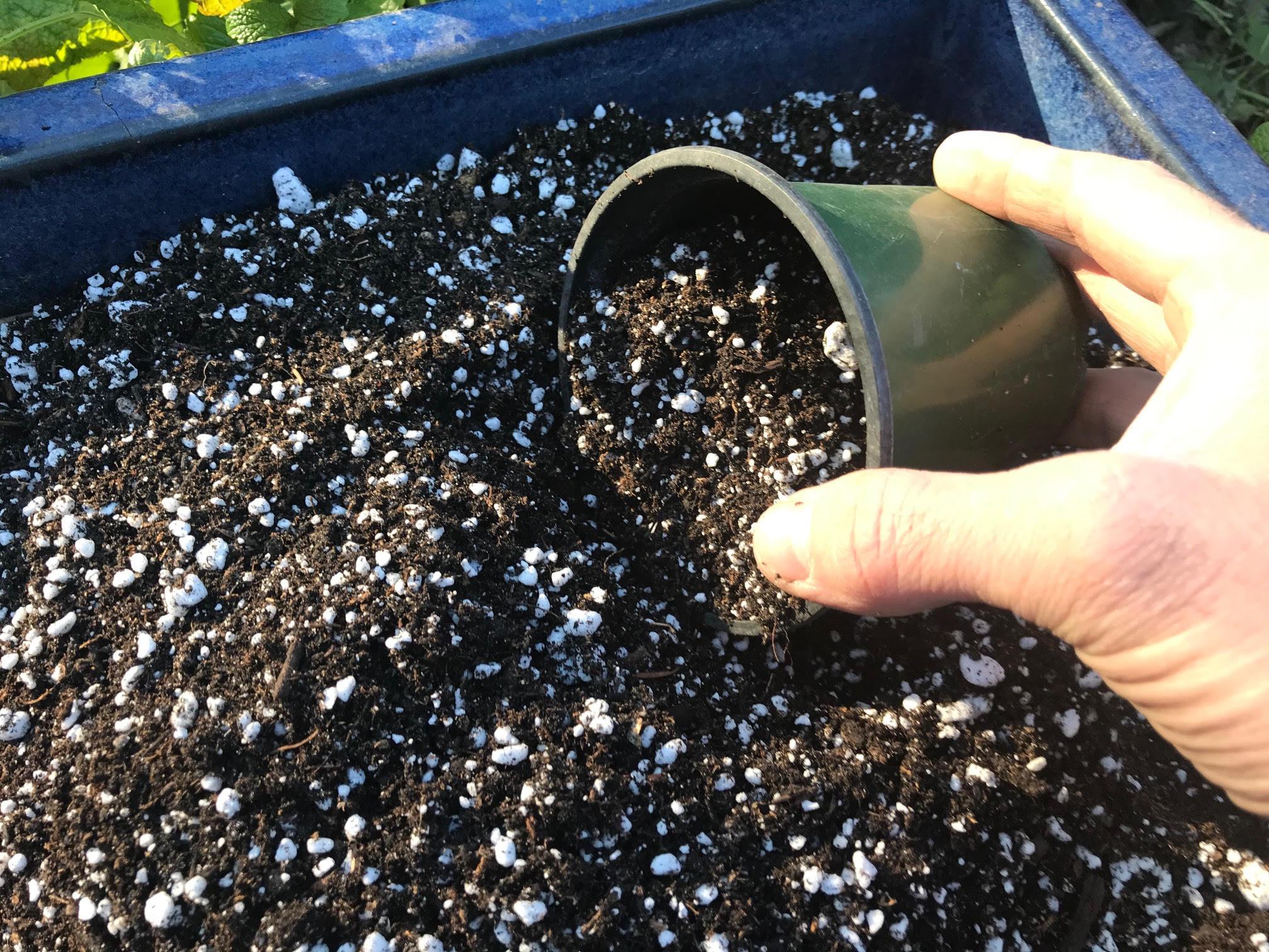 aloe vera perlite soil mix