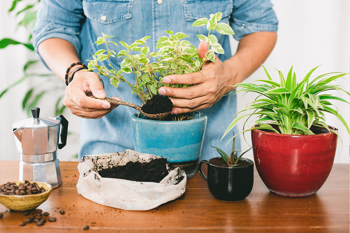 are coffee grounds good for house plants