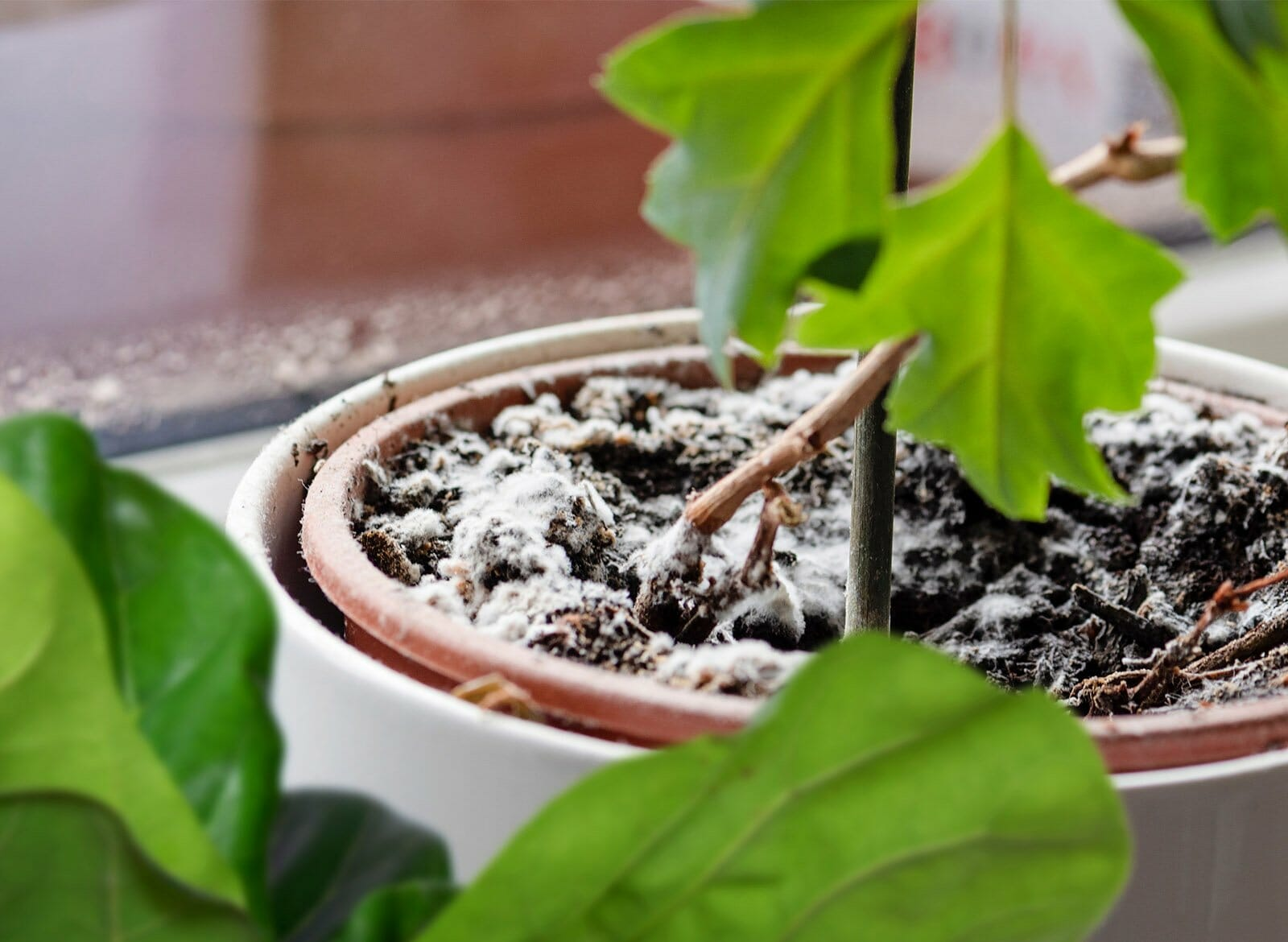how to get rid of mold on top of plant soil