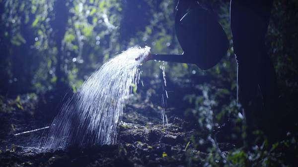 watering at night