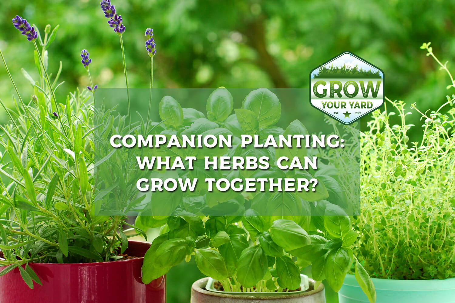 what herbs can grow together