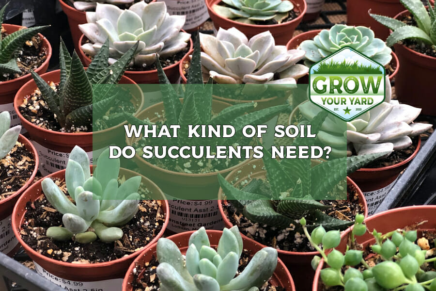 what kind of soil do succulents need