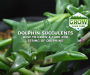 Dolphin Succulents: 10 Tips On How To Grow & Care For String of Dolphins