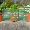 how long can succulents go without water