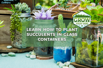 how to plant succulents in glass containers