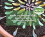 How To Propagate Succulents: An In-Depth Guide for Beginners