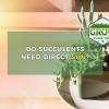 do succulents need direct sun