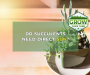 Do Succulents Need Direct Sun? [Tips For Healthy Succulents]