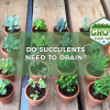 do succulents need to drain