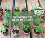 Do Succulents Need To Drain? [Grow Healthy Succulents]