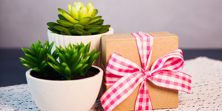 succulents as a gift
