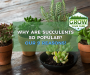 Why Are Succulents So Popular? Here's 9 Reasons Why!