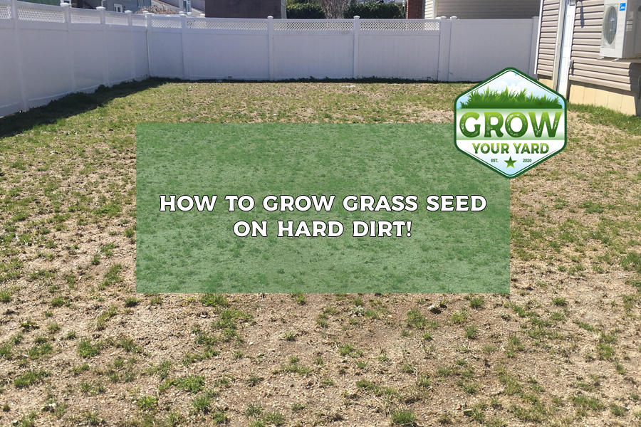 how to grow grass seed on hard dirt