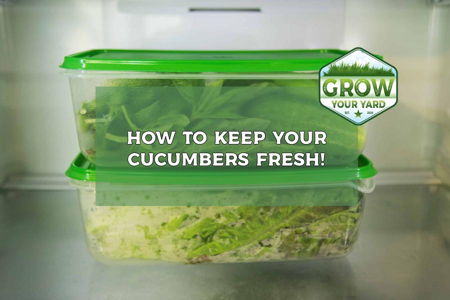 how to keep cucumbers fresh