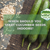 when should you start cucumber seeds indoors