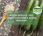 When Should You Start Cucumber Seeds Indoors?