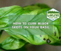 Top 5 Causes of Black Spots on Basil Leaves [Learn The Remedies]