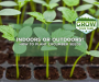 How to Plant Cucumber Seeds [At Home, Indoors or Outdoors!]