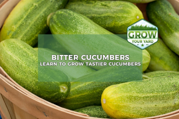 why are my cucumbers bitter